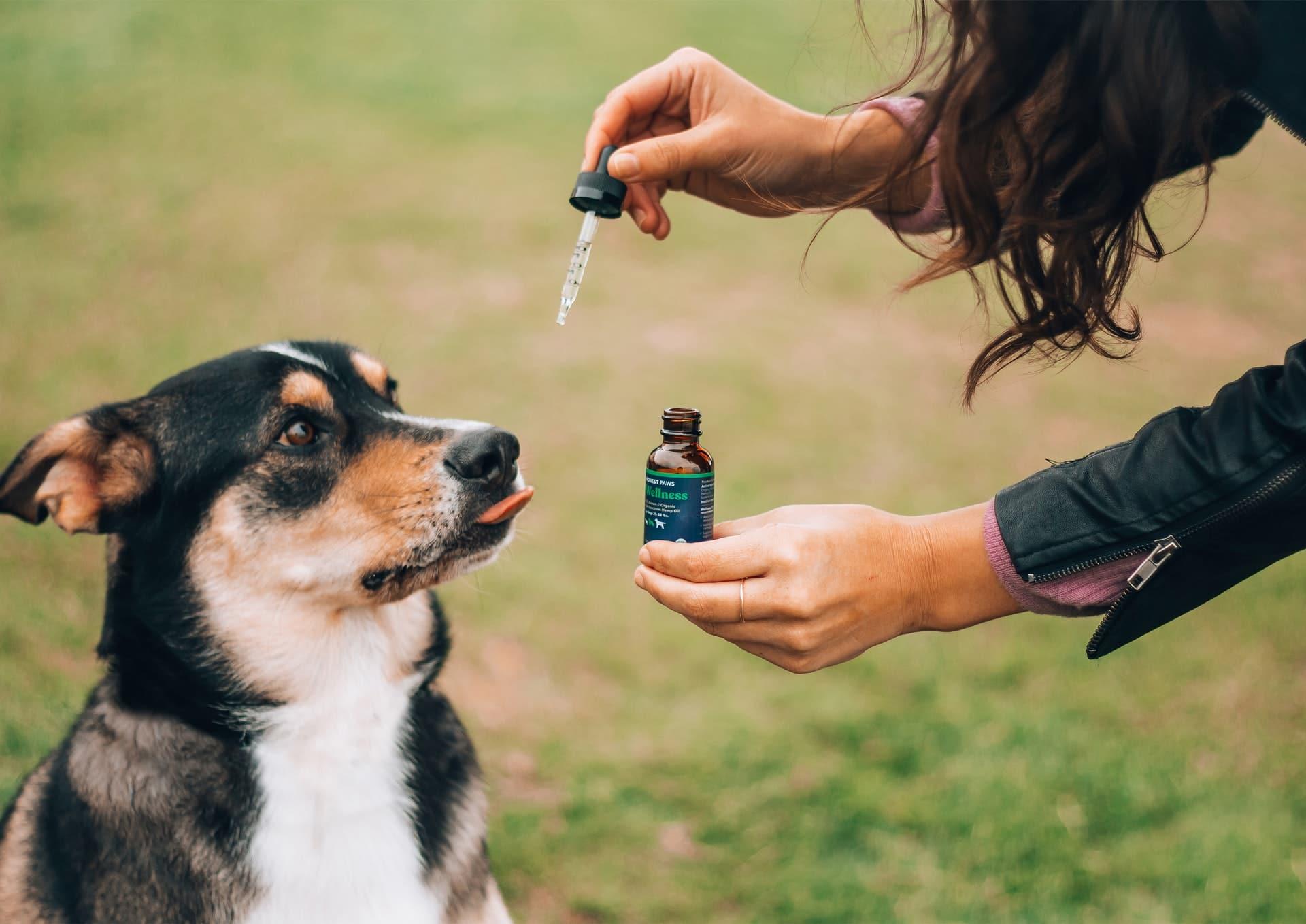 Arthrose et CBD pour chien
